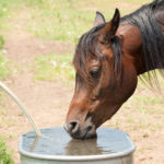 Horse drinking clean water