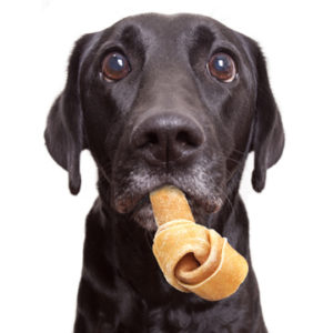 Dog with raw hide bone dangling from mouth