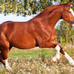 Essential Fatty Acids for Horses