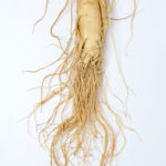 Panax ginseng for calm, well being, and performance