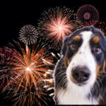 Help your pets prepare for the 4th of July