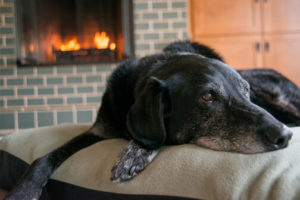 Black lab lying on a dog bed in front of a fireplace