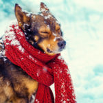 Dog ready for winter