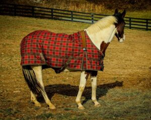 Not Every Horse Needs Blanket